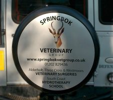 Springbok-veterinary